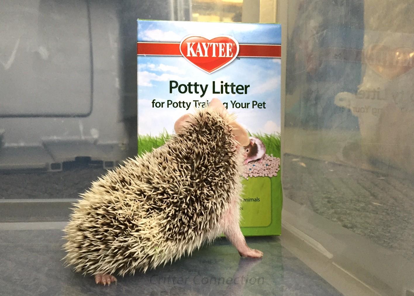Litter Pans Litter u0026 Litter Pan Training - Millermeade Farmu0027s Critter Connection & Litter Pans Litter u0026 Litter Pan Training - Millermeade Farmu0027s ... Aboutintivar.Com