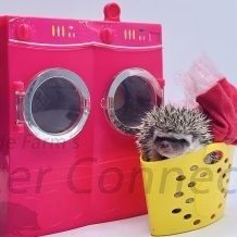 Hedgehogs On The Loose