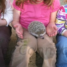 Learning About & Meeting Hedgehogs Before You Buy