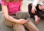 Bonding With Your Hedgehog
