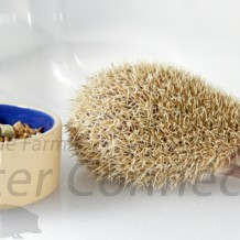 Help! My Hedgehog Is Not Eating: Tempting Taste Buds