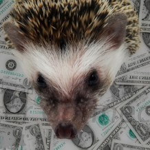 Why Are Hedgehogs Expensive?