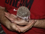Picking Up Your Hedgehog