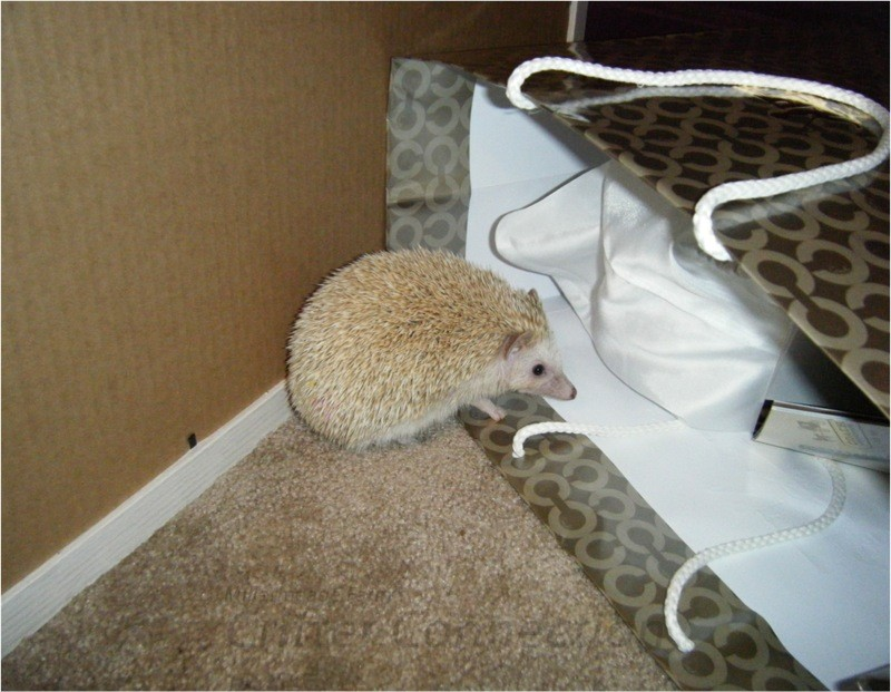 Hedgehog on exploring mode