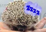 Help! My Hedgehog Sleeps All the Time